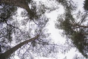 Groeien de bomen tot de hemel
